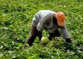 Maroc : OCP Africa, rend hommage aux agriculteurs africains
